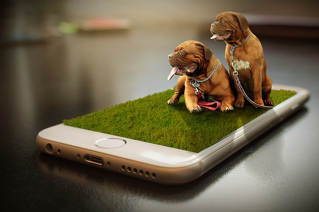 dogs 4611469 640
